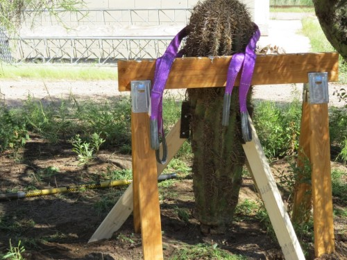 We used this wooden horse to stabilize her and these purple straps to hoist her into her new home. Click to enlarge.