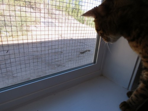 These caterpillars were everywhere this year, including one on the screen, which caught Macho's attention. I slammed that window down quite quickly so that he could avoid the sting.