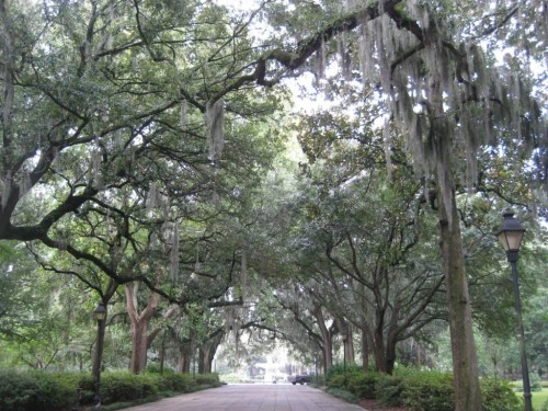 "Savannah, Georgia, with Savannah College of Art and Design professor Meghan Woodcock: ""Then she warns us not to touch the Spanish moss hanging down over our heads. It descends enticingly from the tree branches like spun taffy in the window of a beach boardwalk store. Chiggers live in the moss, she says, and will burrow their way into your skin. Once they're in there it's nearly impossible to lodge them free, and you'll believe you'll never stop scratching."""
