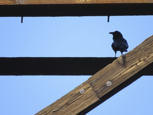 Have I mentioned how much I love our train trestle ravens?