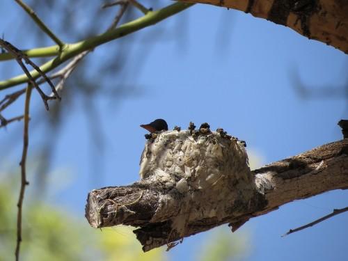 Yes, that is a teensy-weensie hummingbird head!