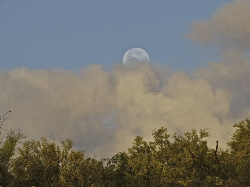 Morning moon peeking through cloud cover.
