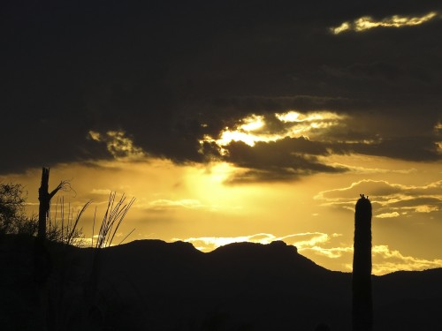 Desert sunrise from my rooftop. Splintered saguaro spines at left.