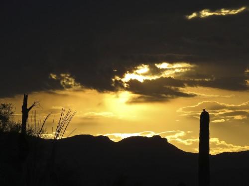 Desert sunrise from my rooftop. Splintered saguaro spines at left.